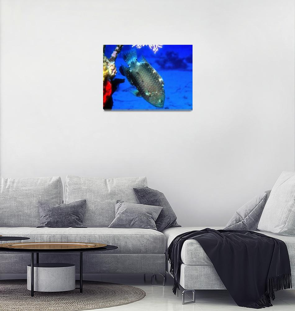 """""""Colourful Wrasse""""  (1992) by JoaoPonces"""