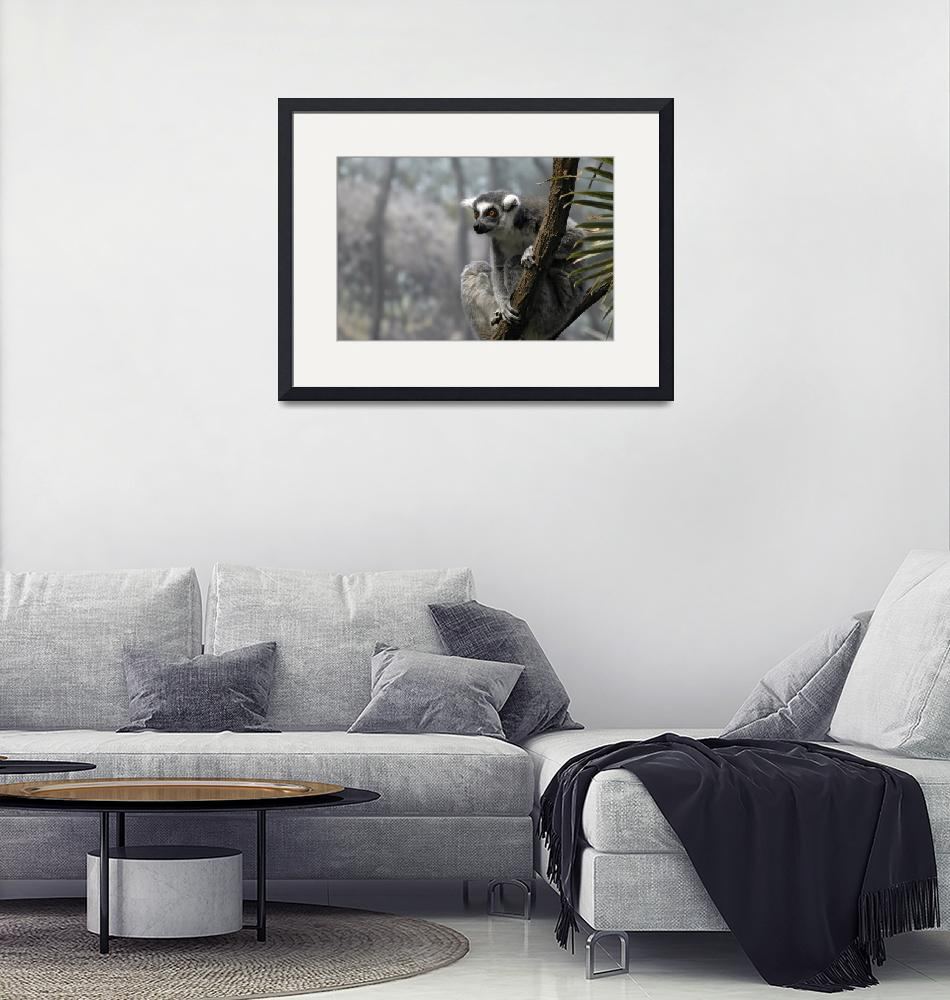 """""""Ring-Tailed Lemur""""  (2008) by PaulCoco"""