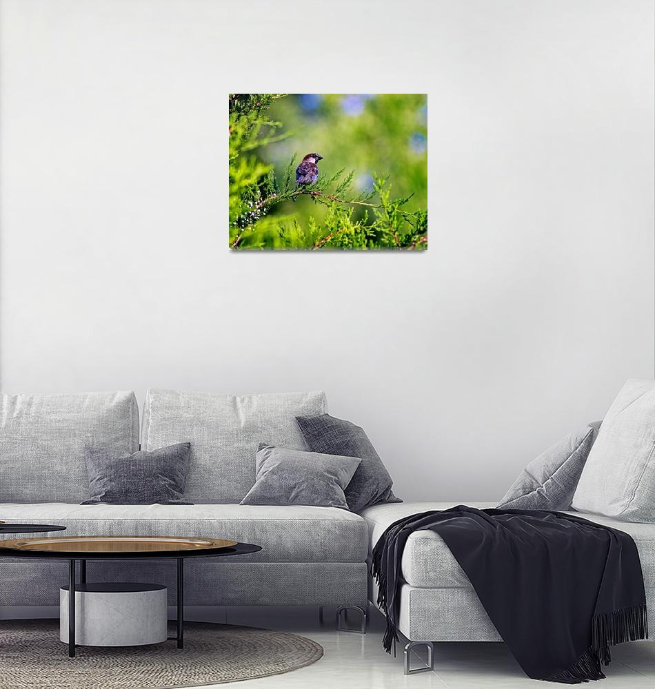 """Sparrow In Evergreen Tree""  (2013) by KsWorldArt"