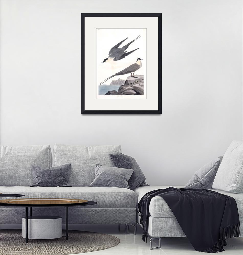 """""""Arctic Yager, Plate 267""""  by FineArtClassics"""