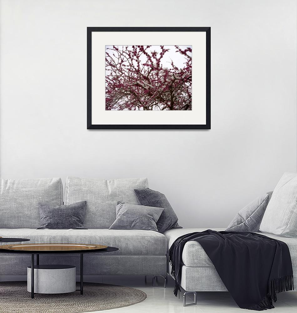 """""""Redbud in the Snow""""  (2010) by ChristinaHoward"""