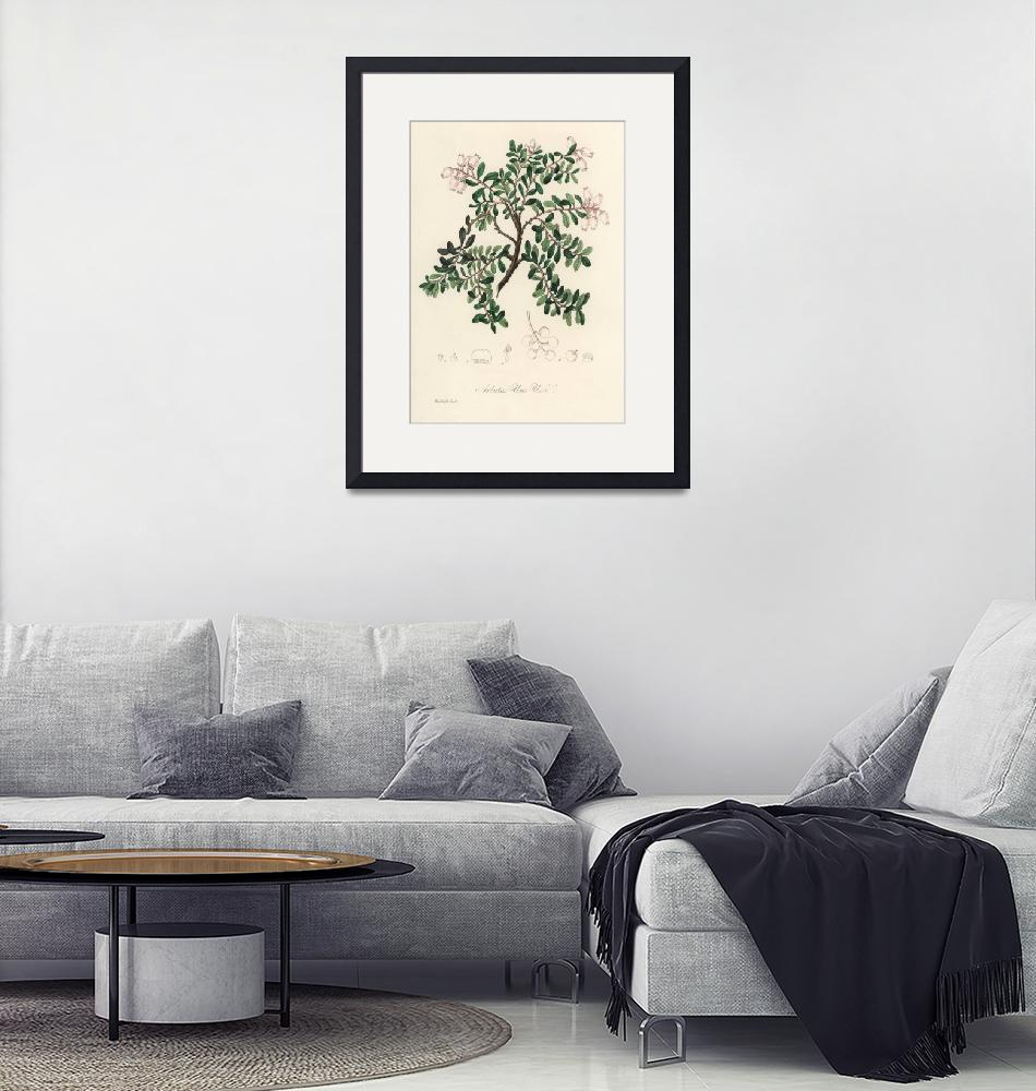 """""""Vintage Botanical Bearberry""""  by FineArtClassics"""