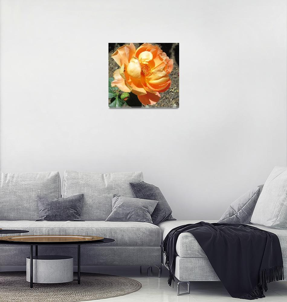 """""""apricot rose"""" (2015) by AnnWilliams"""