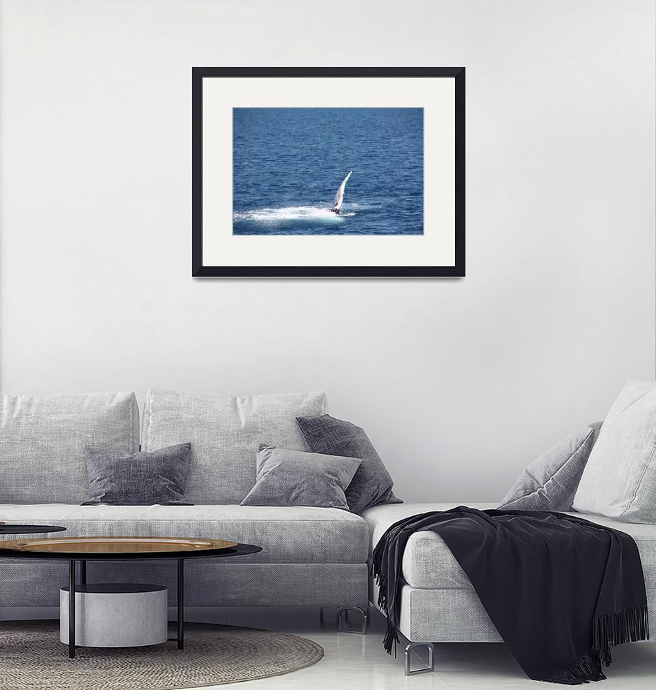 """NaP_ Whale Watching106""  by nevilleprosser"