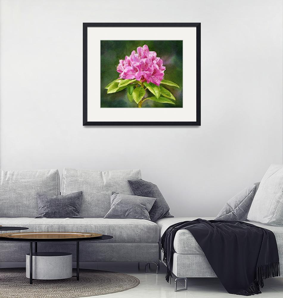 """Magenta Colored Rhododendron Dark Background""  (2015) by Pacific-NW-Watercolors"