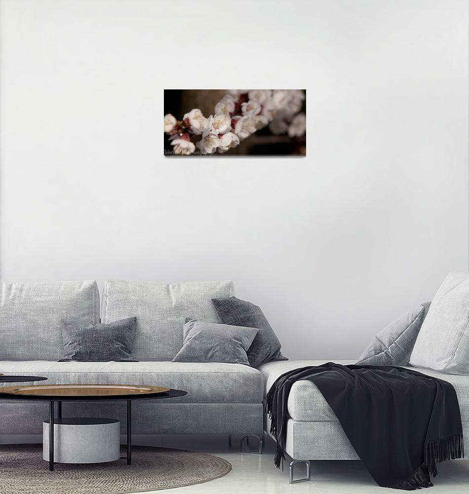 """""""Cherries""""  (2011) by markwuttke"""