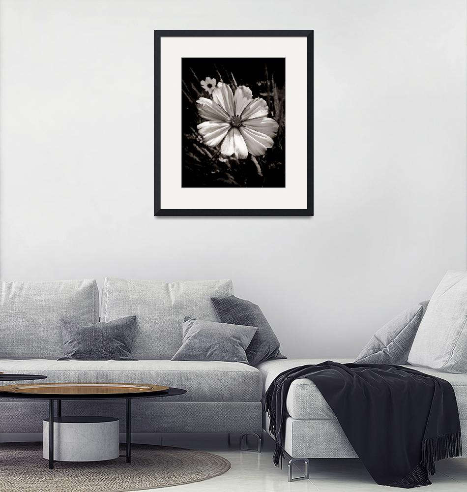 """""""Cosmos In Black And White""""  (2008) by bavosiphotoart"""