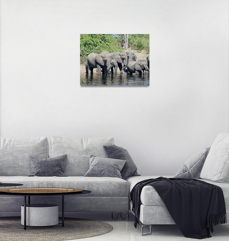 """Wild elephants""  (2007) by InspiringImages"