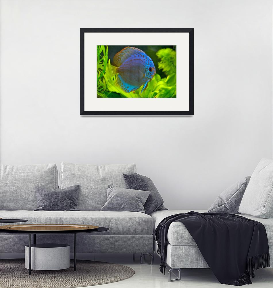 """""""Discus""""  by sshaw35"""