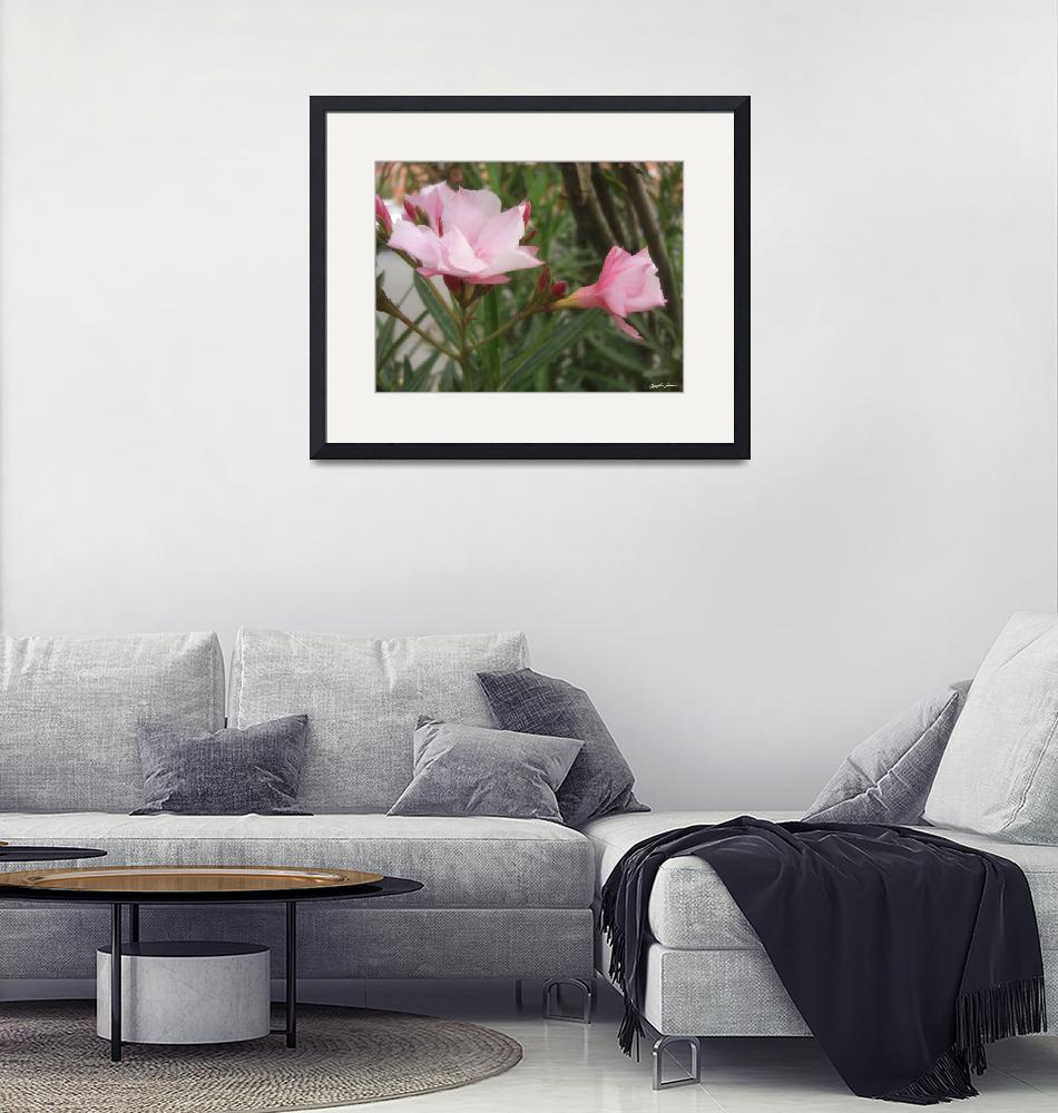"""""""Single Pink Oleander 10"""" (2010) by ChristopherInMexico"""