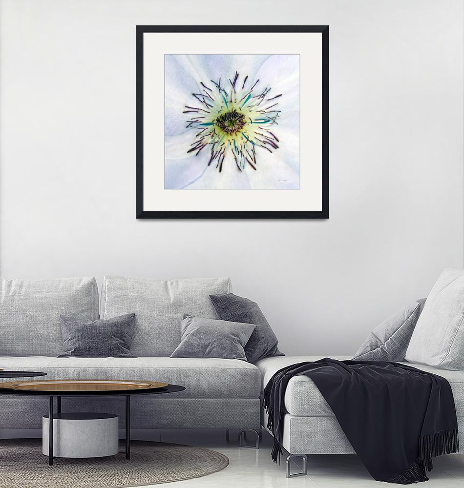 """""""White Expressive Clematis Flower Macro Photo 4922A""""  (2017) by Ricardos"""