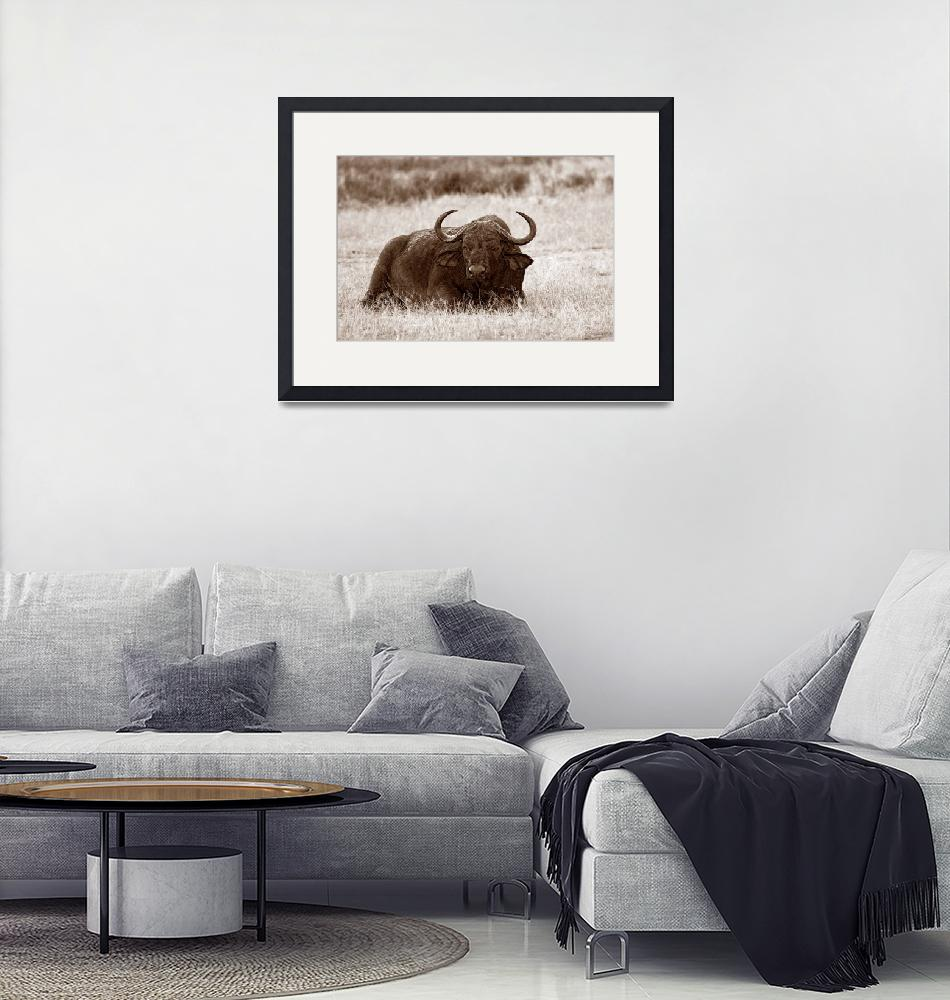 """""""Old Buffalo Bull in Sepia Tones""""  by scotchmacaskill"""