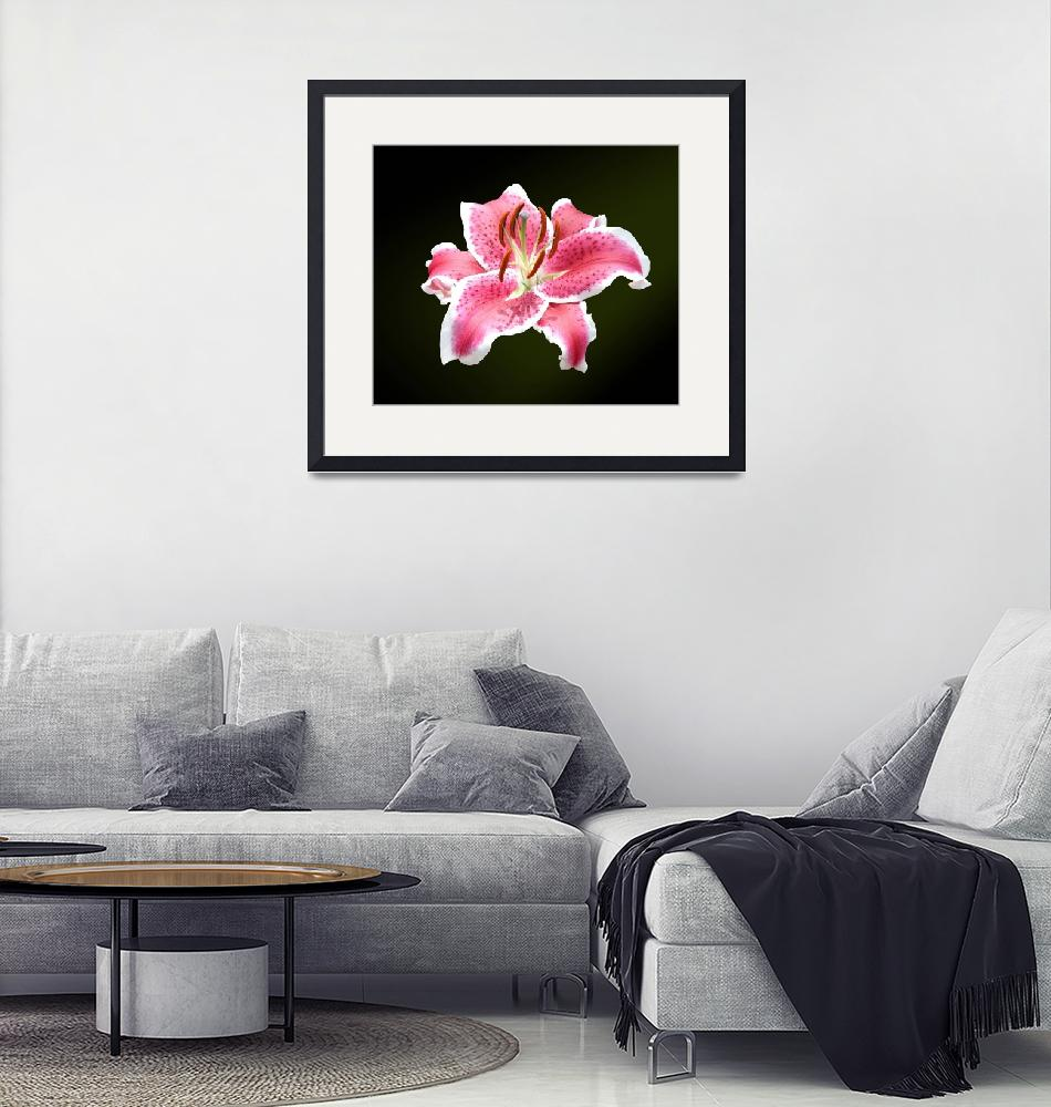 """""""Orchid"""" (2012) by Dullinger"""