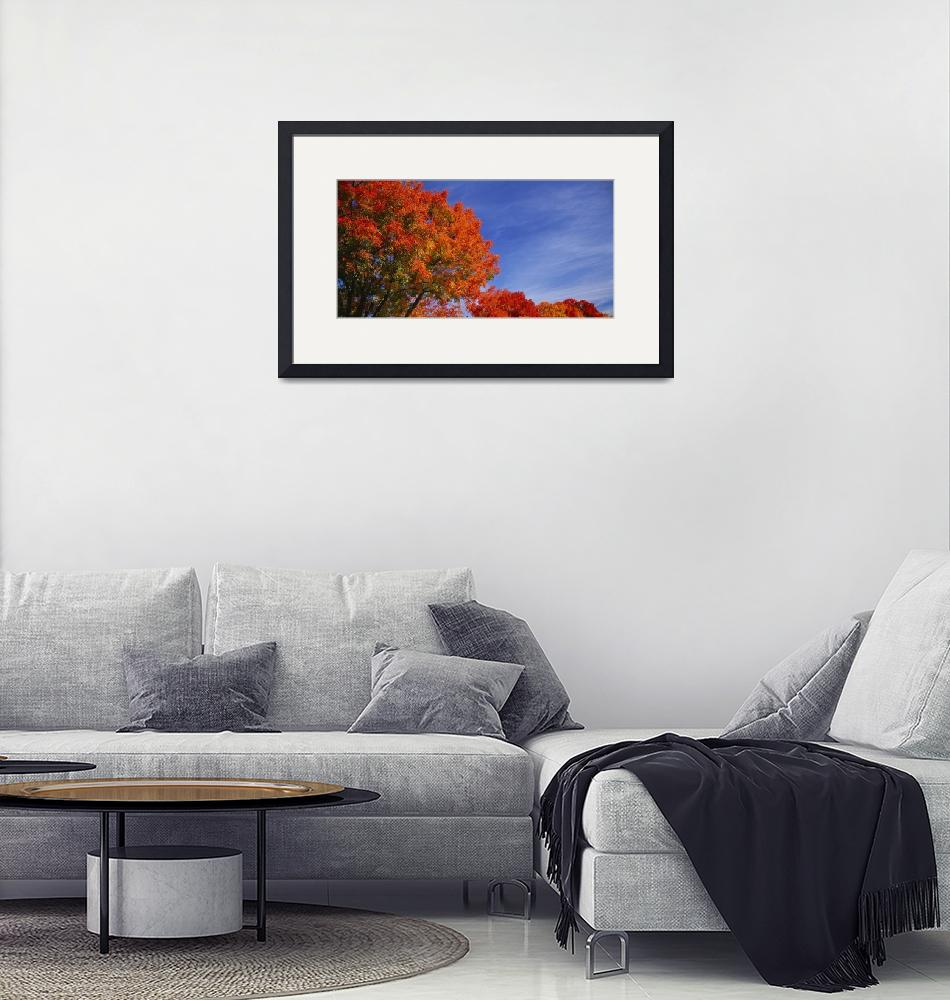 """""""Low angle view of trees with red leaves""""  by Panoramic_Images"""