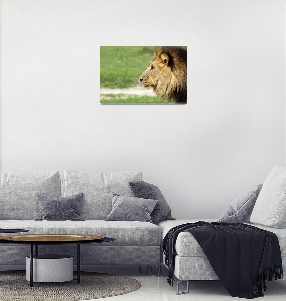 """African Lion""  (2014) by carelvdm"