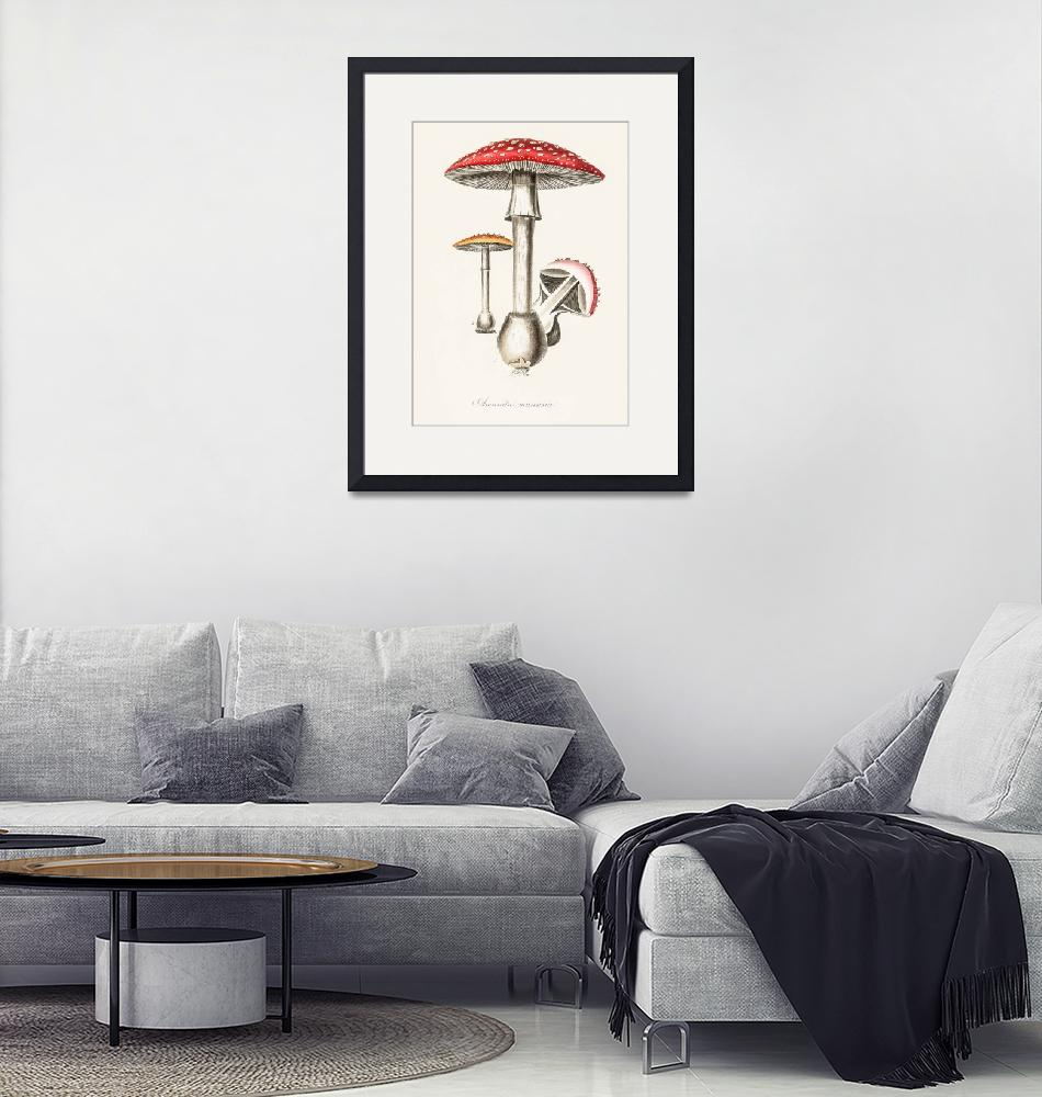 """""""Vintage Botanical Amanita muscaria"""" by FineArtClassics"""