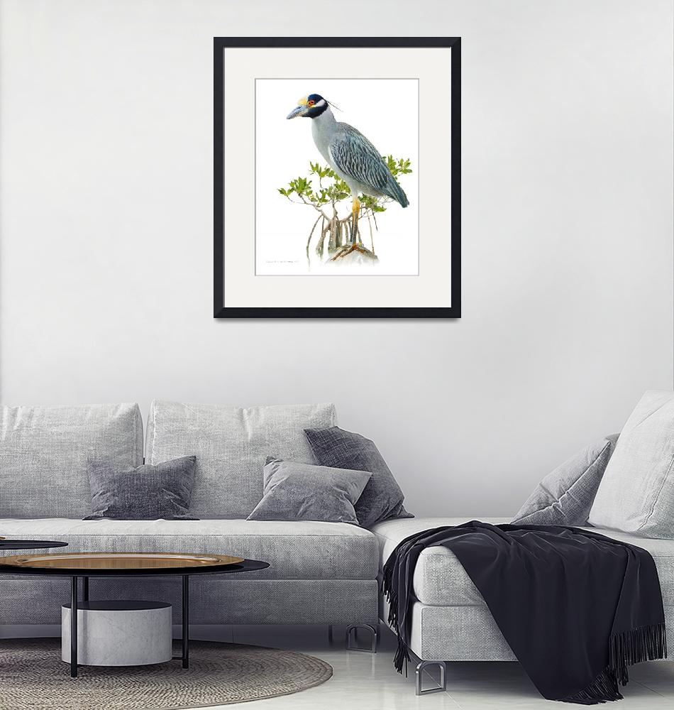 """""""yellow crowned night heron on white""""  (2020) by rchristophervest"""