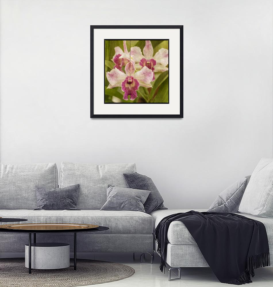 """""""Orchid""""  by lillisphotography"""