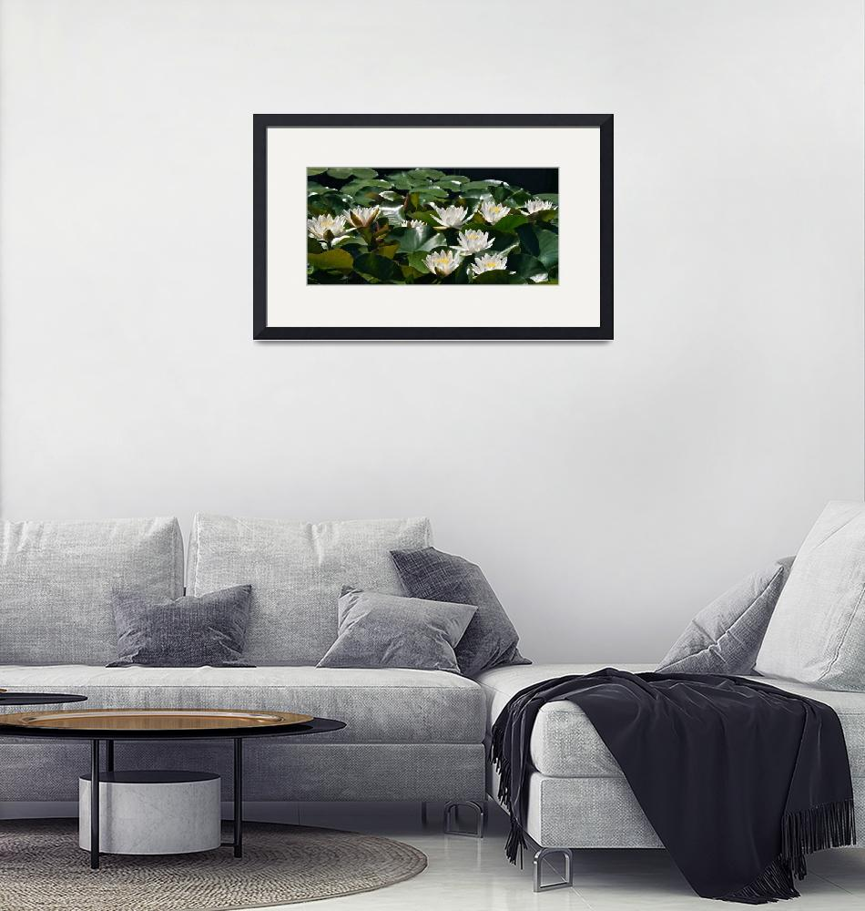 """Double White Hardy Water Lilies""  (2012) by LightHeart"