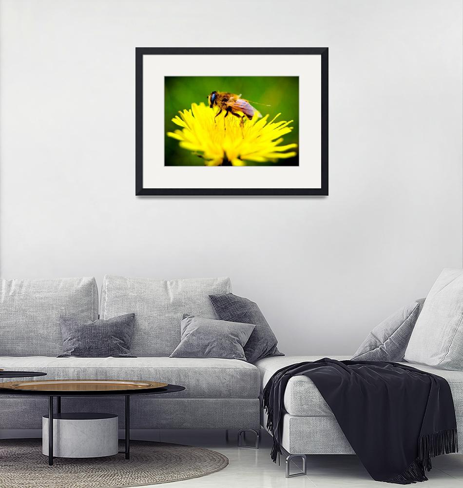 """""""Bee On A Yellow Flower In Spring""""  (2010) by dc-photography"""