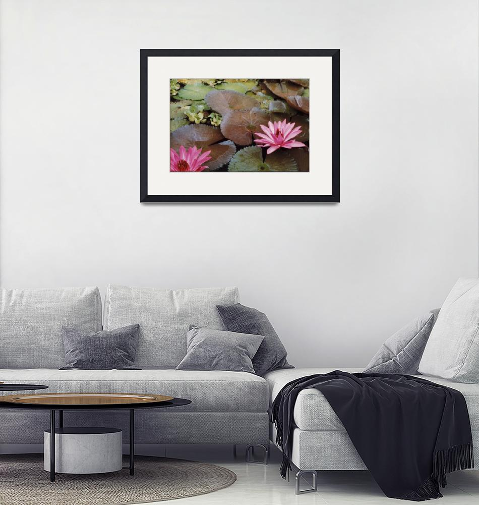 """""""Colombian Water Lilies""""  by Lawrence"""
