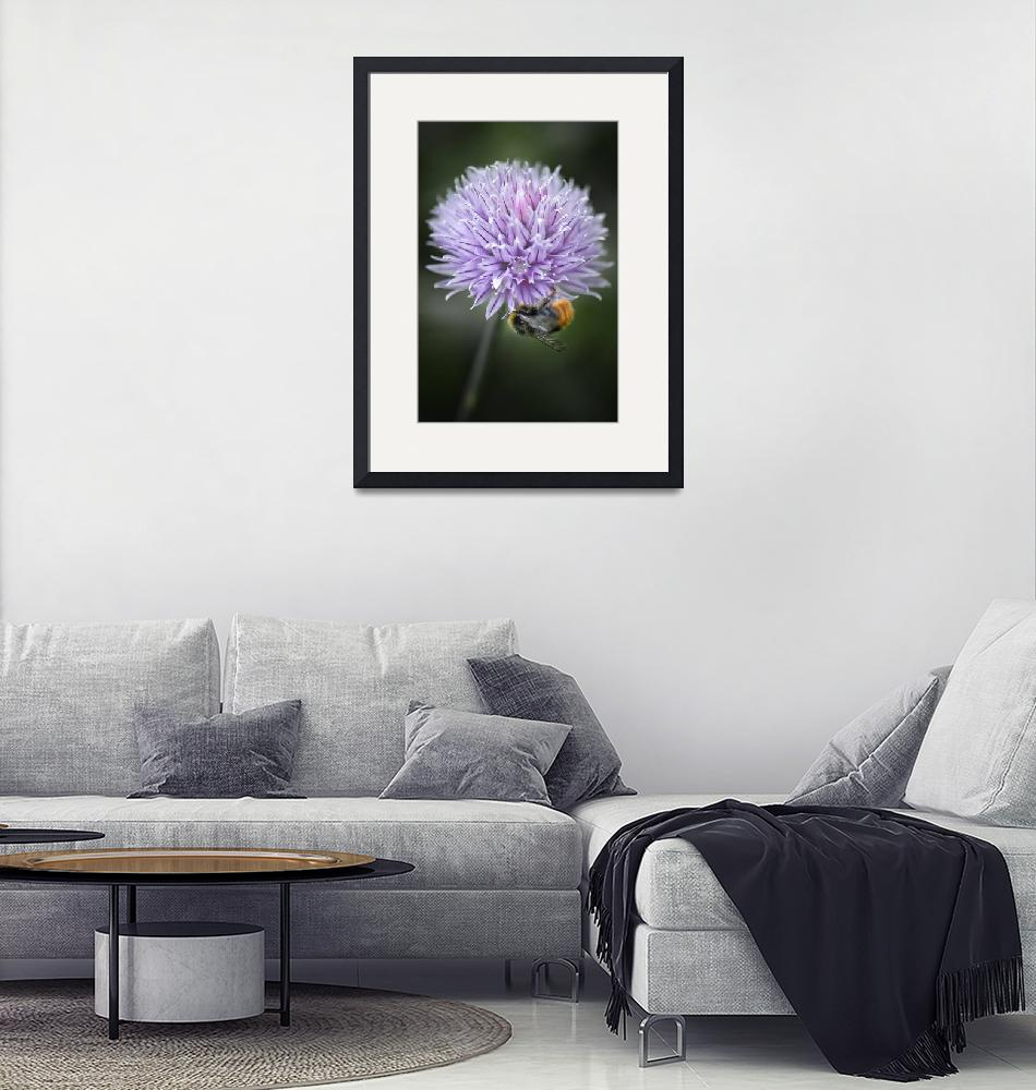 """""""Bee and Chives""""  (2009) by maxblack"""