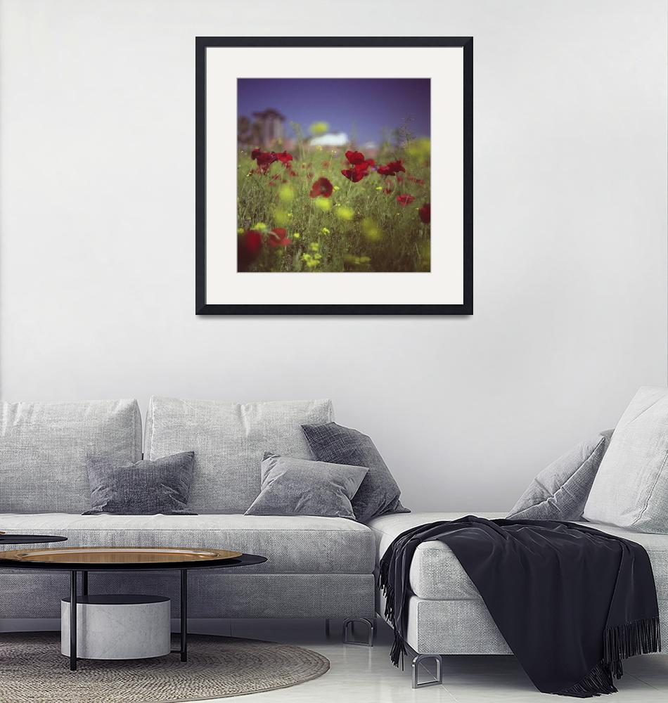 """Red wild flowers poppies urban city""  (2011) by edwardolive"