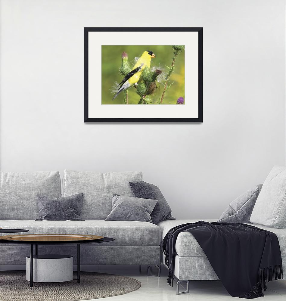 """""""American Goldfinch Photograph""""  by ArtLoversOnline"""