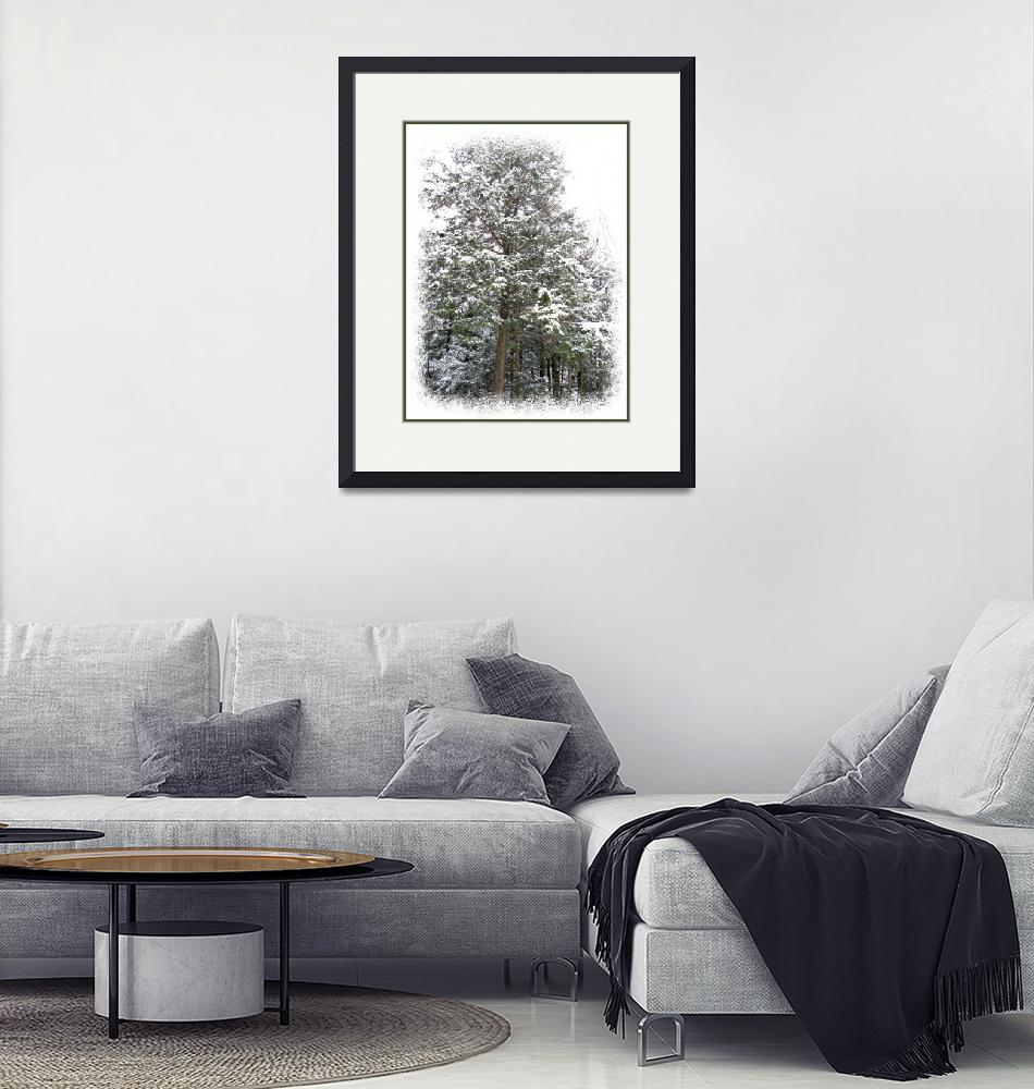 """Pine Trees Standing Tall in a Snow Covered Forest""  by Chantal"