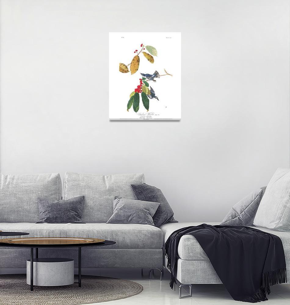 """Cerulean Warbler, Plate 48""  by FineArtClassics"
