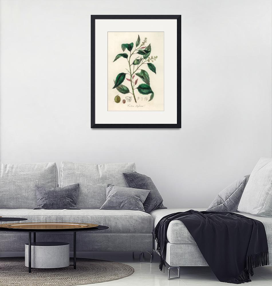 """""""Vintage Botanical Purging Croton"""" by FineArtClassics"""