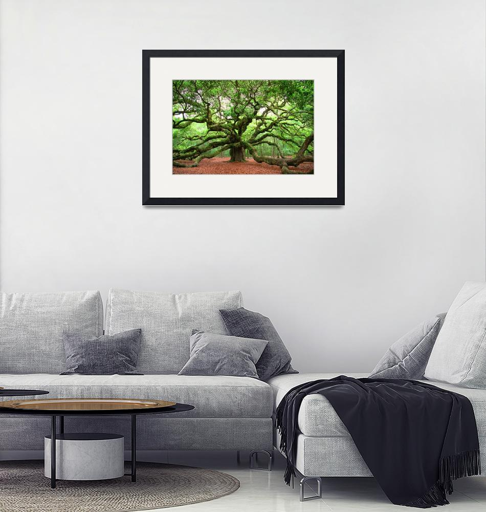 """Angel Oak""  (2010) by kenrainwaterphotography"