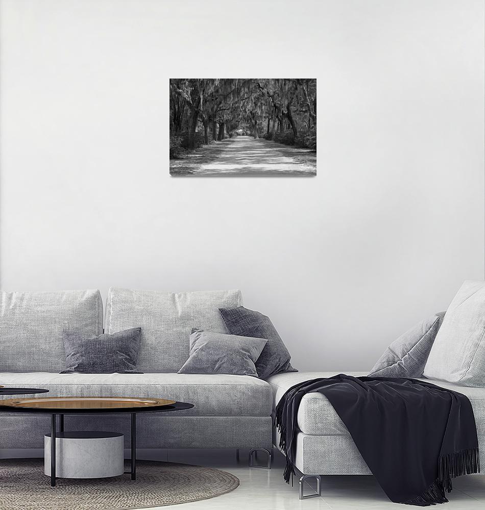 """""""Shady Road""""  (2010) by Davidhoyle"""