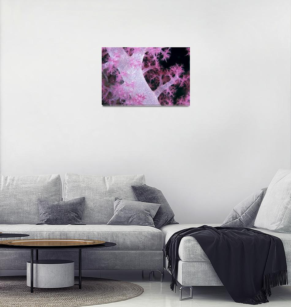 """Palau, Alcyonarian Coral Pink Detail, Black Backgr""  by DesignPics"