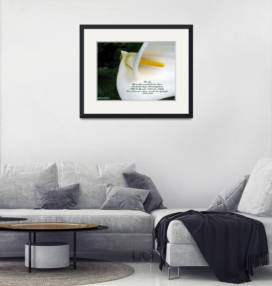 """""""The Lily""""  (2006) by CRS"""