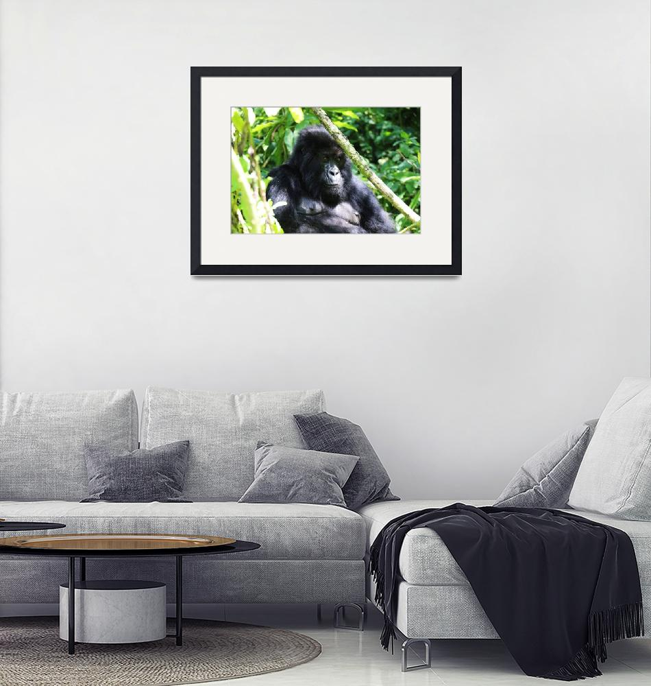 """""""Pensive Gorilla""""  by Sammons-Photography"""