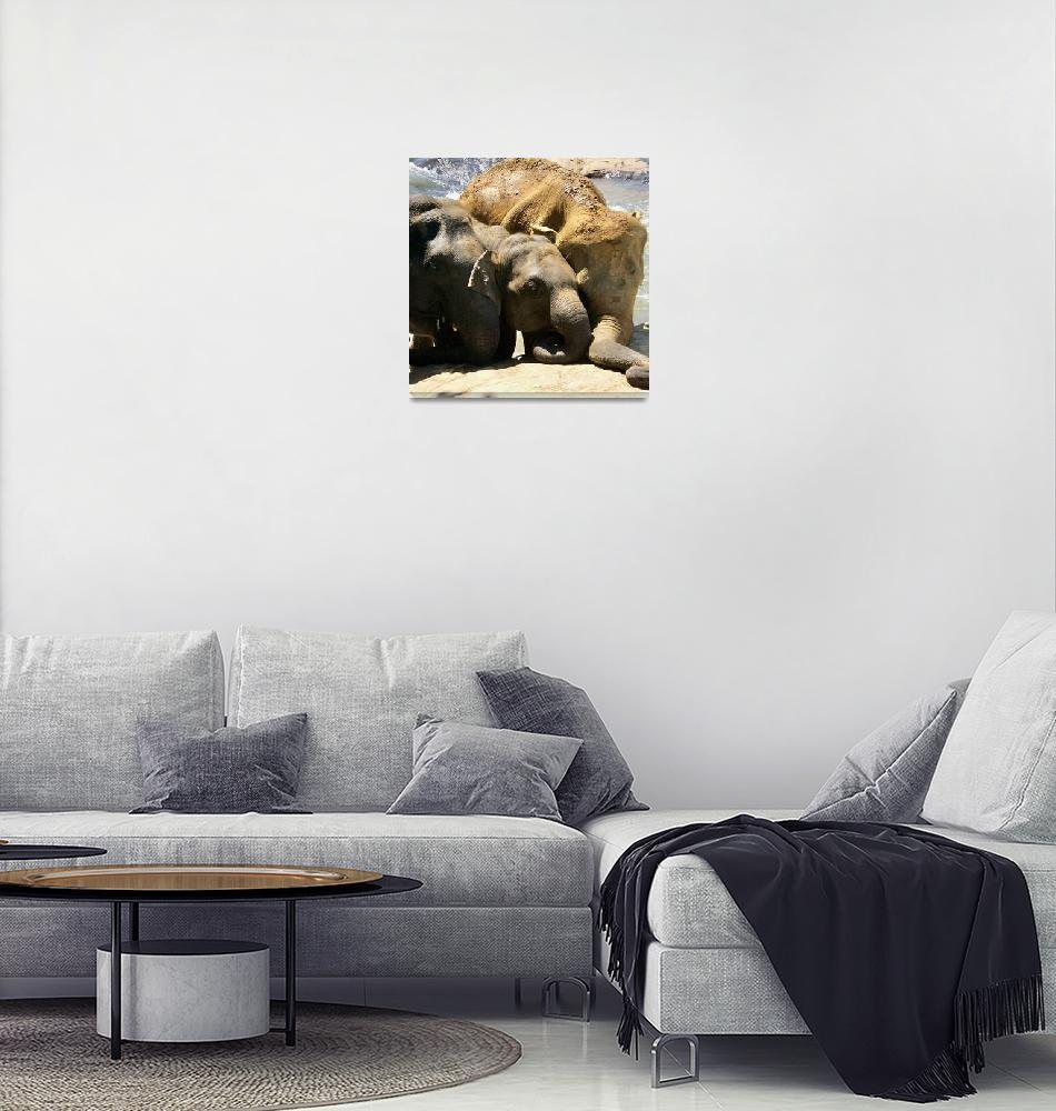 """""""Sri Lankan elephants 2""""  by ebonflow"""