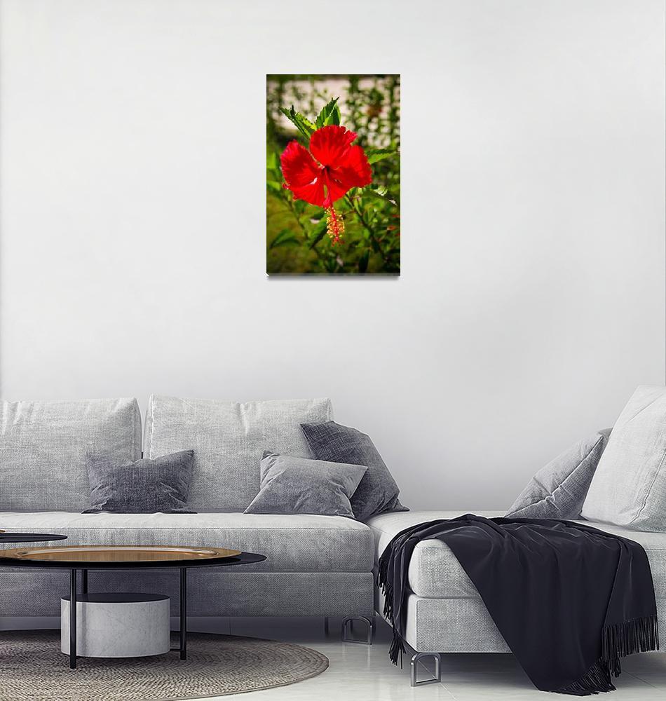 """Haitian Hibiscus Flower""  (2010) by C_Rivait"