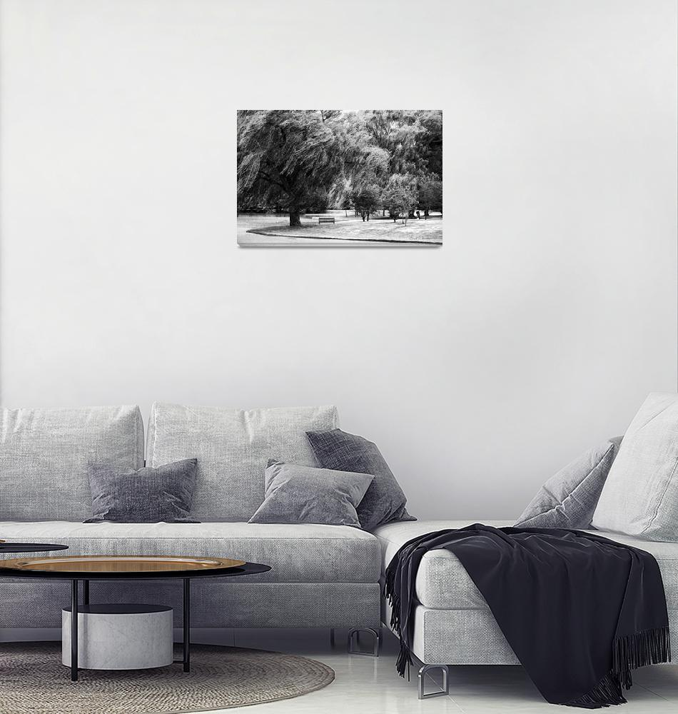 """Weeping Willow Tree Landscape Meditation Wall Art""  (2010) by PhotographsByCarolFAustin"