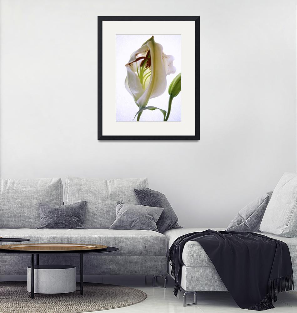 """""""Promise, Lily beginning"""" by Alexa"""