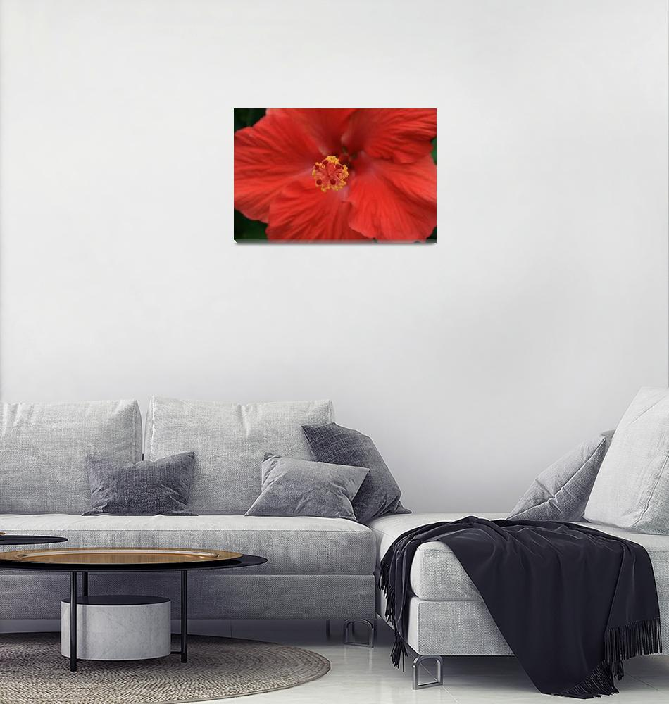 """""""Red Flower Close Up""""  (2008) by brianyoung81"""