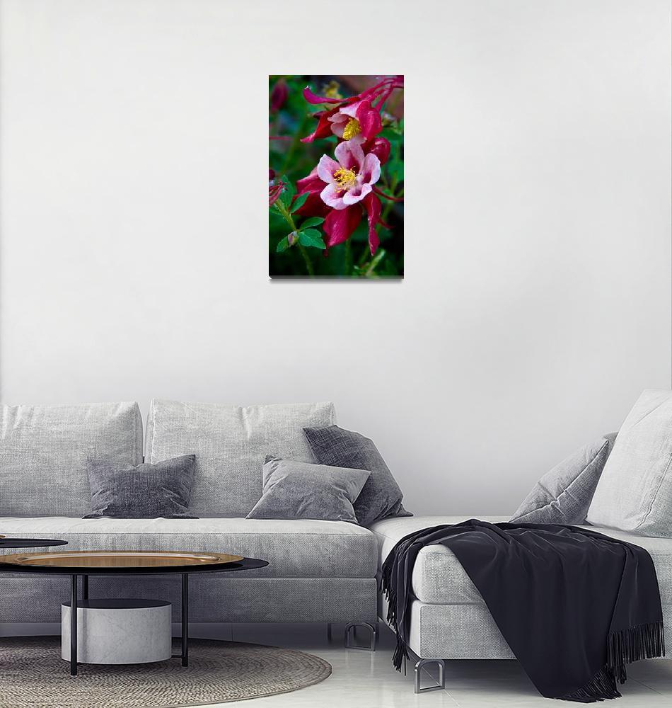 """Red Columbine Flower""  (2008) by lightningman"