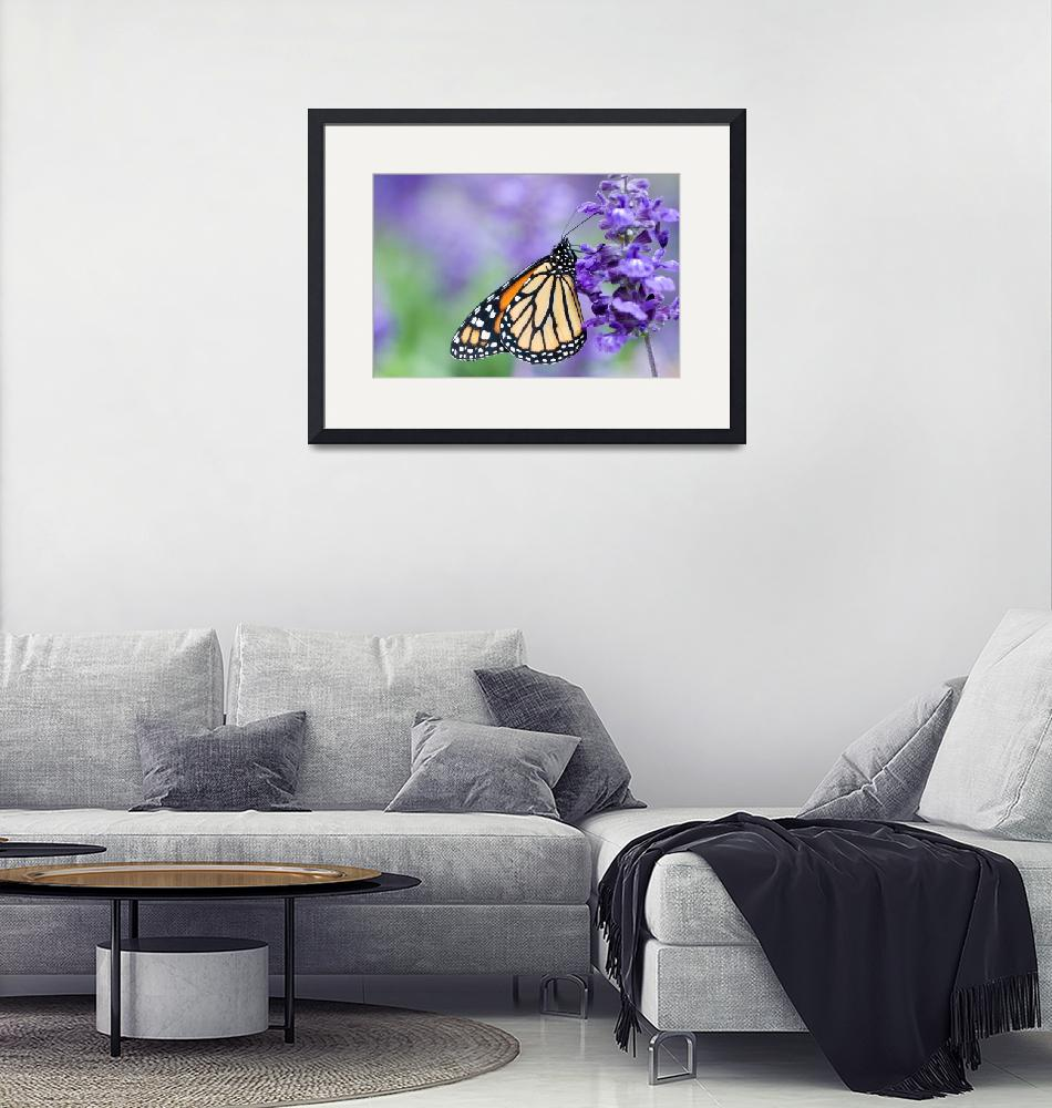 """Monarch Butterfly and Purple Flowers""  by OGphoto"