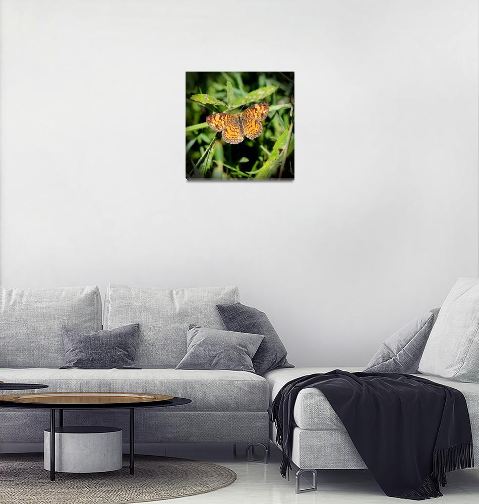"""Pearl Crescent Butterfly 2016""  (2016) by KsWorldArt"