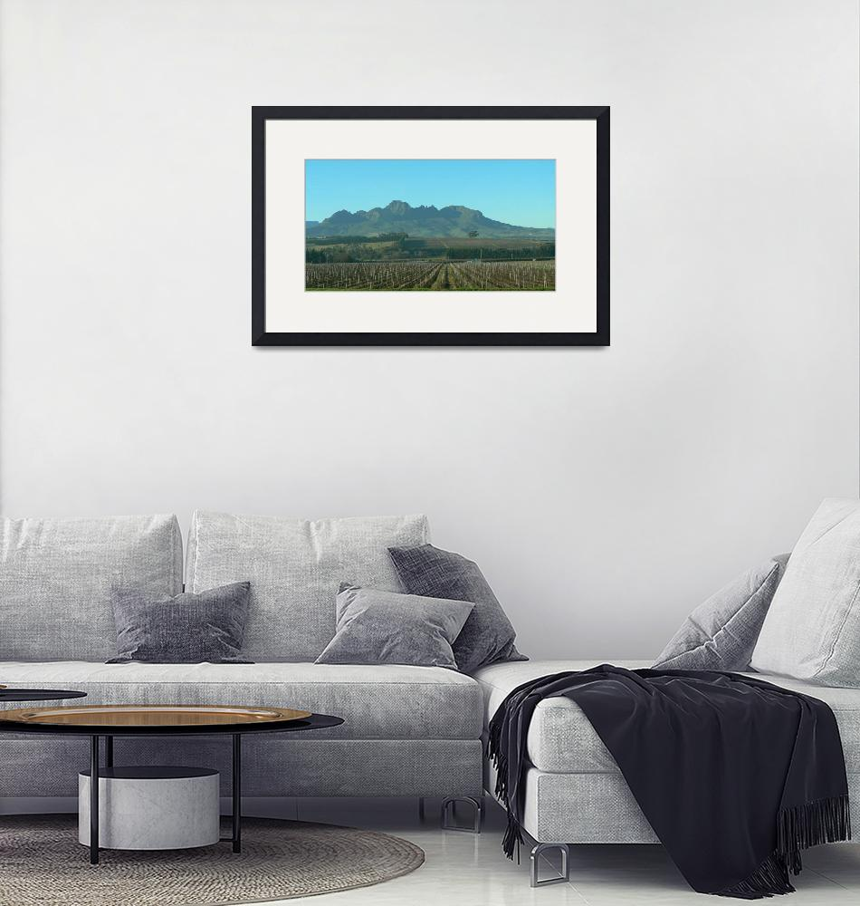 """""""Cape Winelands- P1140085""""  (2013) by rayjacque"""