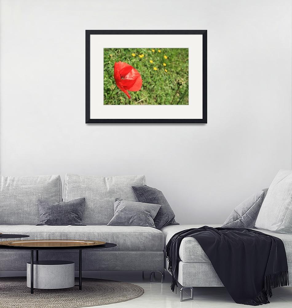 """""""Memorial Day Poppy""""  (2010) by sarahme220"""