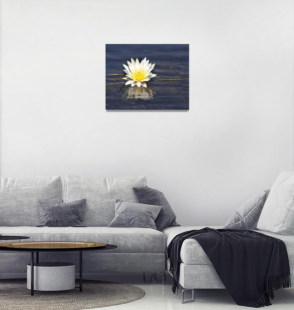 """""""Day Water-Lily""""  (2016) by poleyland"""