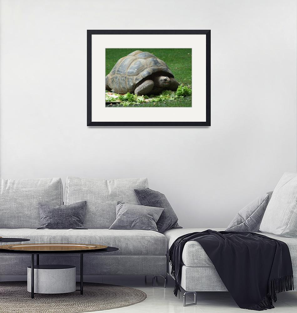 """Giant tortoise/ turtle""  (2007) by argaito"