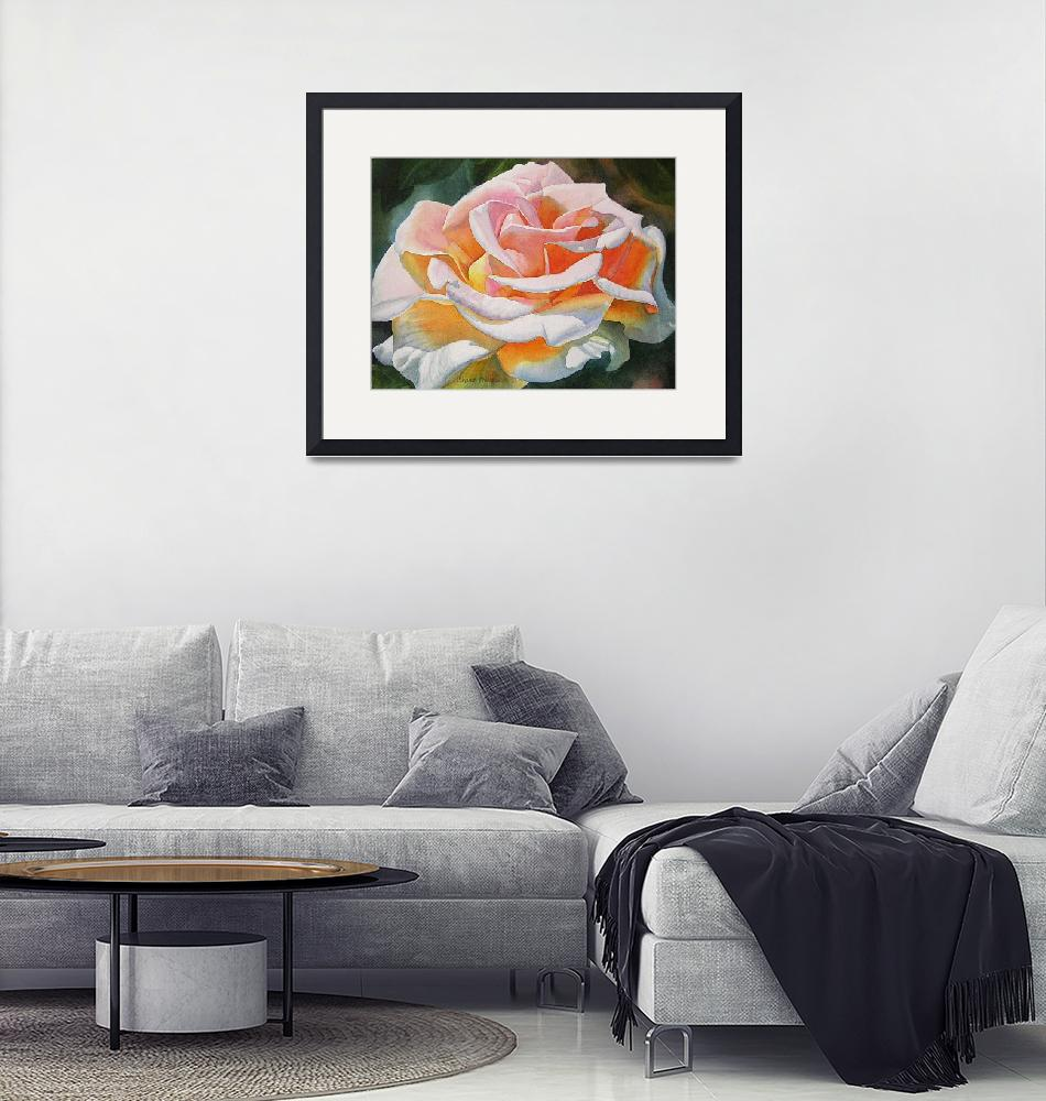 """""""White Rose with Orange Glow""""  (2010) by Pacific-NW-Watercolors"""