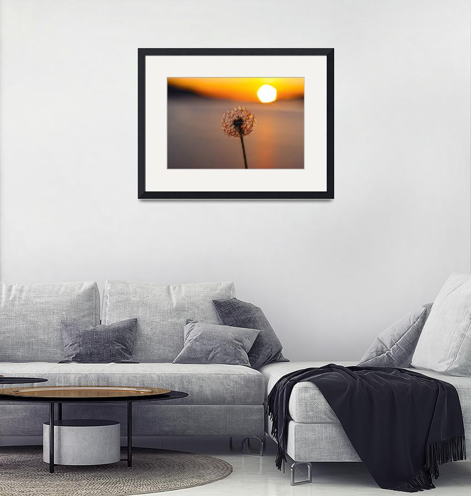"""Dandelion Sunset, Campotosto lake, Abruzzo, Italy""  (2012) by GennariDavide"